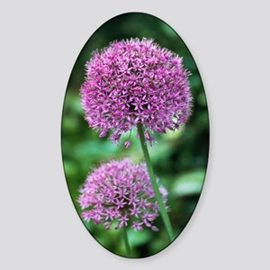 Ornamental onion (Allium aflatunens Sticker (Oval)