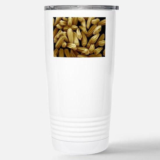 Ox-eye daisy seeds, SEM Stainless Steel Travel Mug