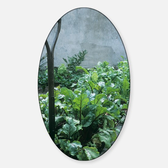 Organic vegetable garden Sticker (Oval)