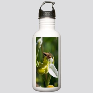 Ophrys apifera var chl Stainless Water Bottle 1.0L