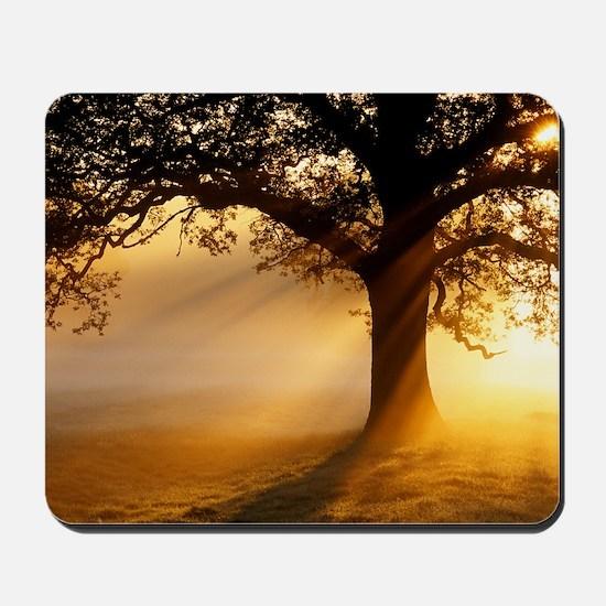 Oak tree at sunrise Mousepad