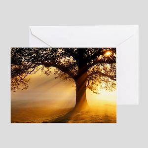 Nature greeting cards cafepress oak tree at sunrise greeting card m4hsunfo