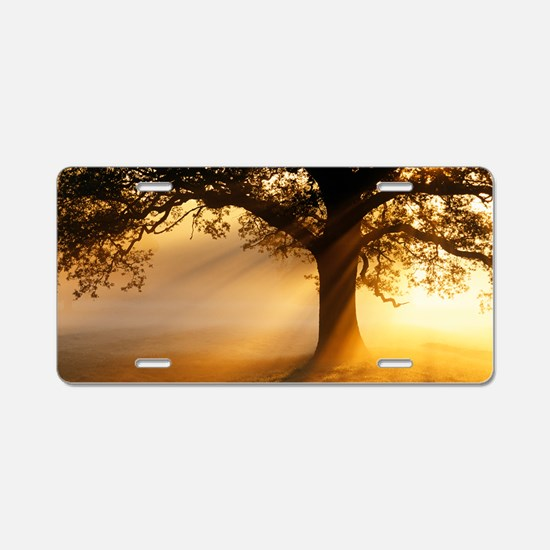 Oak tree at sunrise Aluminum License Plate
