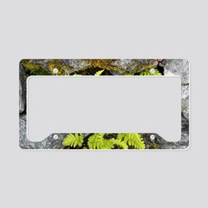 Oak fern (Gymnocarpium dryopt License Plate Holder