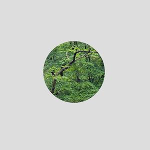 Oak and beech trees, Dartmoor, UK Mini Button