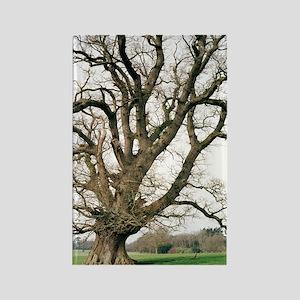 Oak tree Rectangle Magnet