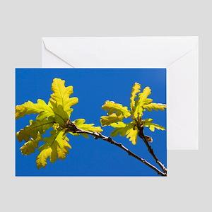 Oak (Quercus sp.) Greeting Card