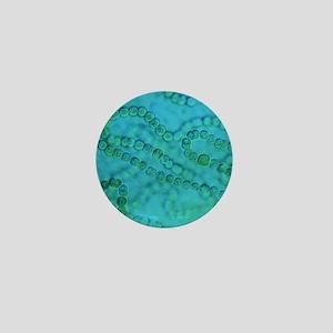 Nostoc algae Mini Button
