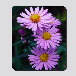 New York aster flowers (Aster sp.) Mousepad