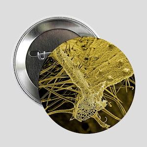 "Nettle leaf, SEM 2.25"" Button"