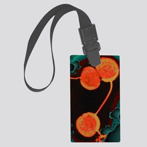 Neisseria gonorrhoeae bacteria,  Large Luggage Tag