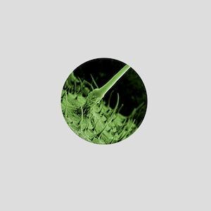 Nettle leaf stinging trichome, SEM Mini Button