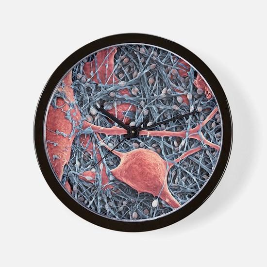 Nerve cells and glial cells, SEM Wall Clock