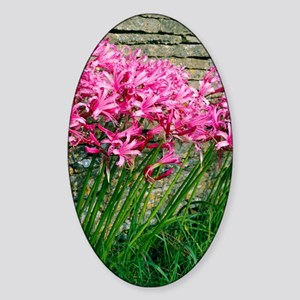 Nerine bowendii Sticker (Oval)