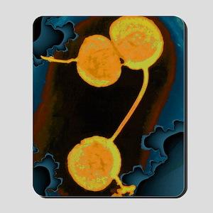 Neisseria gonorrhoeae bacteria, TEM Mousepad