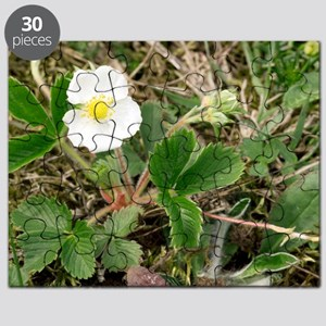 Musk strawberry (Fragaria moschata) Puzzle