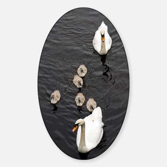 Mute swan and cygnets Sticker (Oval)
