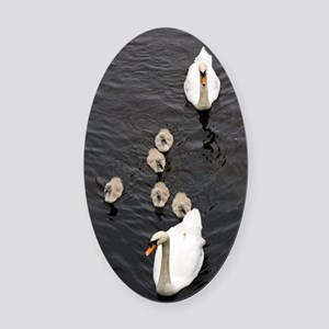 Mute swan and cygnets Oval Car Magnet