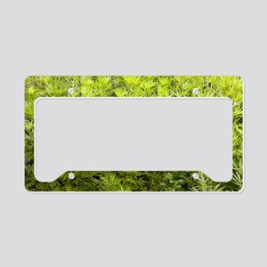 Mugwort (Artemisia vulgaris) License Plate Holder