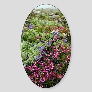 Mountain heathland Sticker (Oval)