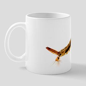 Mosquito larva, light micrograph Mug
