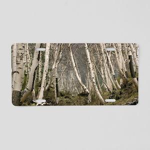 Mount Etna birches (Betula  Aluminum License Plate