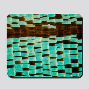 Moth wing scales, light micrograph Mousepad