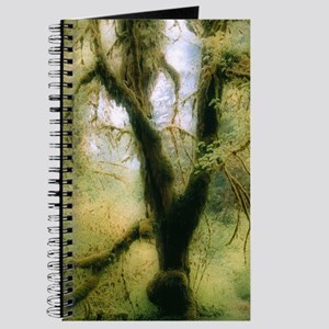 Moss-covered tree Journal