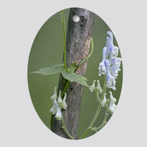 Monkshood (Aconitum albo-violaceum) Oval Ornament