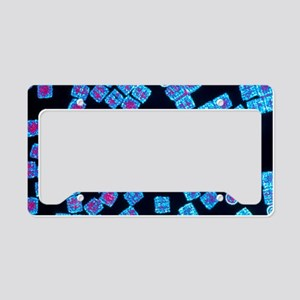 Molecules of haemocyanin prot License Plate Holder