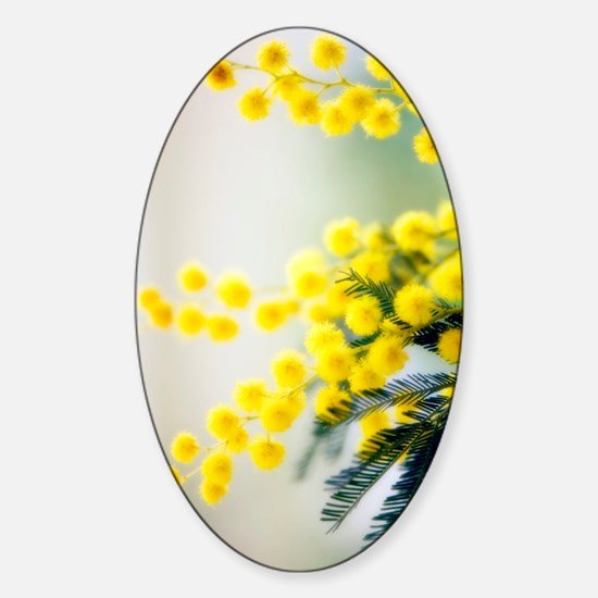 Mimosa (Acacia dealbata) Sticker (Oval)
