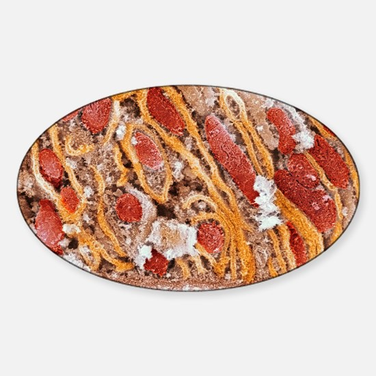 Mitochondria, SEM Sticker (Oval)