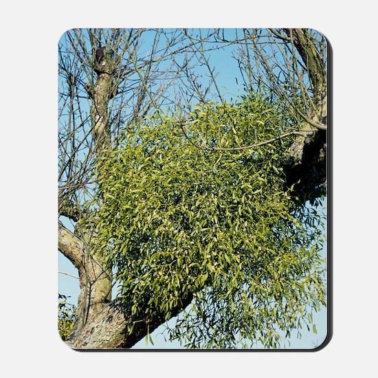 Mistletoe Mousepad