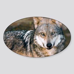 Mexican Gray Wolf Sticker (Oval)