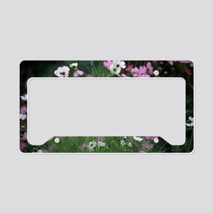 Mexican aster (Cosmos bipinna License Plate Holder