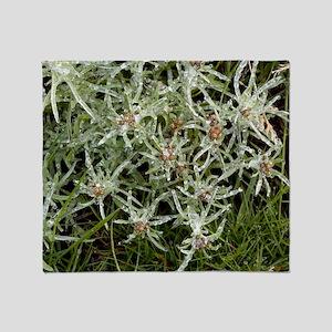 Marsh cudweed (Gnaphalium uliginosum Throw Blanket