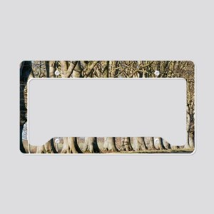 Mature beech trees (Fagus syl License Plate Holder