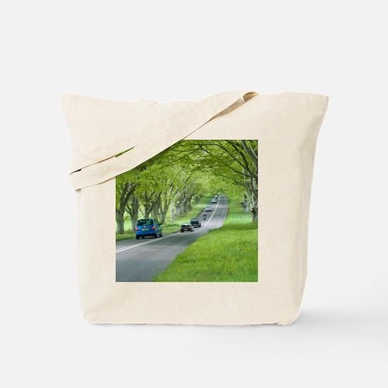 Mature beech trees (Fagus sylvatica) Tote Bag
