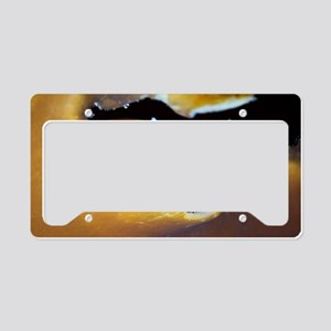 Marine snail License Plate Holder