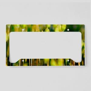 Marsh Hair Moss (Polytrichum  License Plate Holder