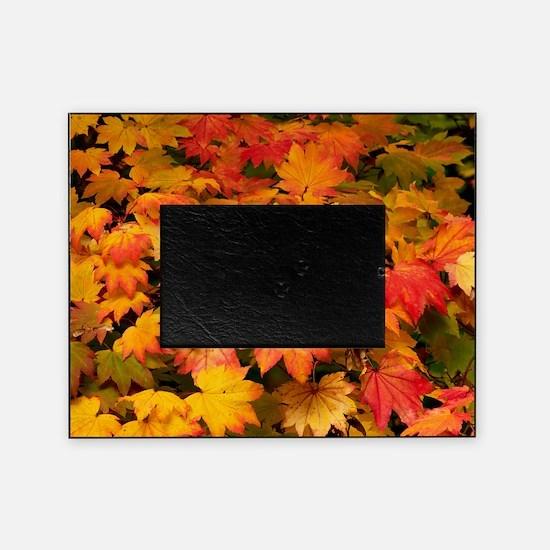 Maple (Acer japonicum vitifolia) lea Picture Frame