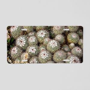 Mammillaria standleyi Aluminum License Plate