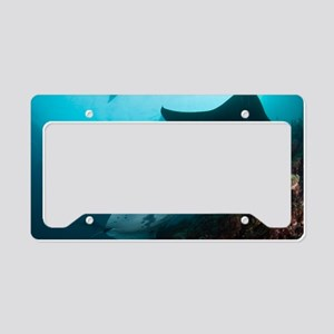 Manta rays License Plate Holder