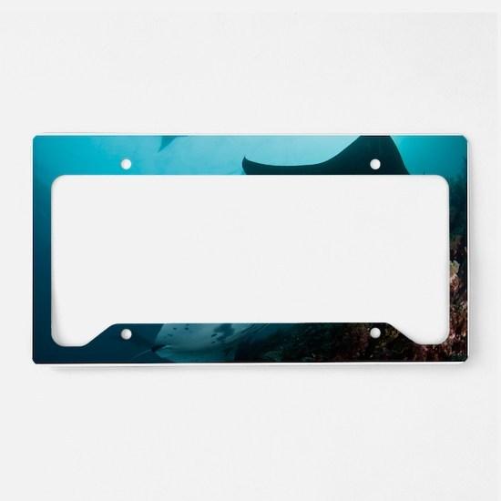 Manta rays License Plate Holder
