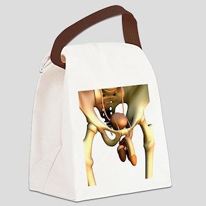 Male uro-genital system, artwork Canvas Lunch Bag