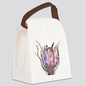 Male shoot of cord moss Canvas Lunch Bag