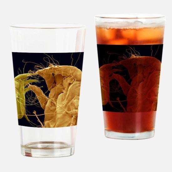 Mange mites, SEM Drinking Glass