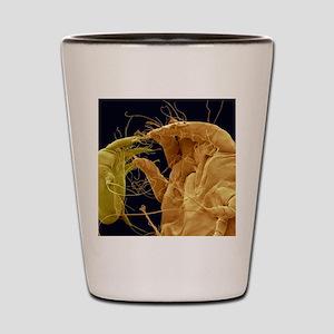 Mange mites, SEM Shot Glass