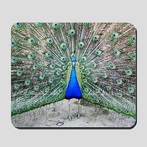 Male peacock displaying Mousepad