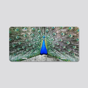 Male peacock displaying Aluminum License Plate